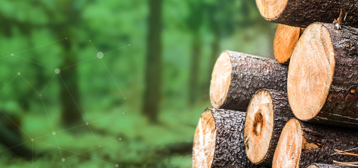 Webinar: Digital solutions fit for the future forest industry